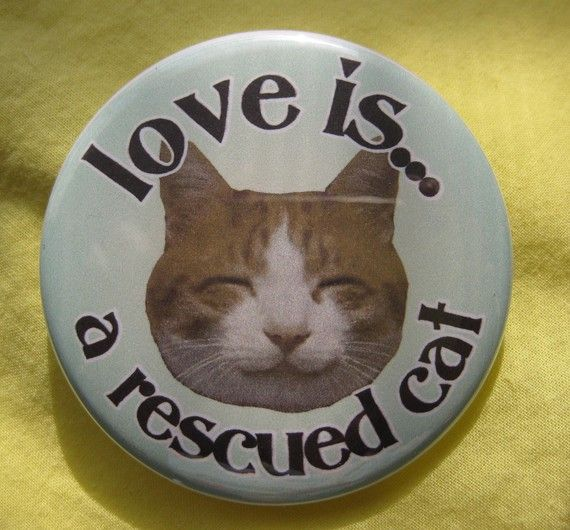Rescue or adopt. Never buy!! All my furbabies are rescued from kill shelters or the street
