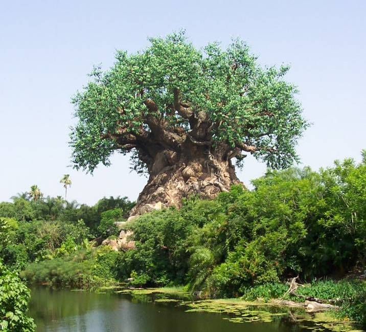 Tree Baobab near Limpopo river, South Africa