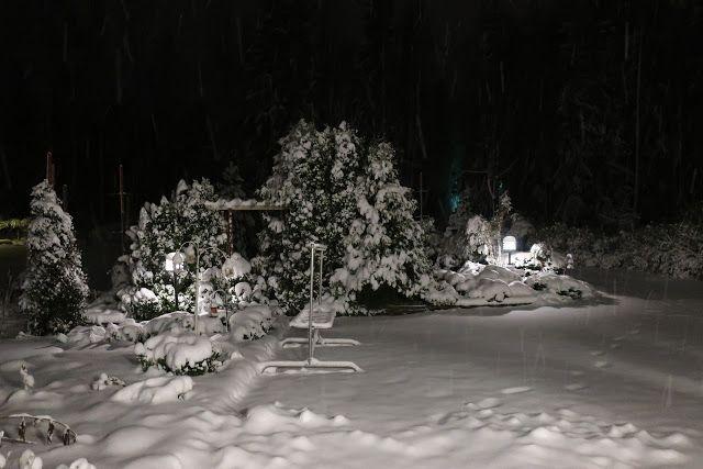 Puutarhan Lumo: Hetki talven taikaa