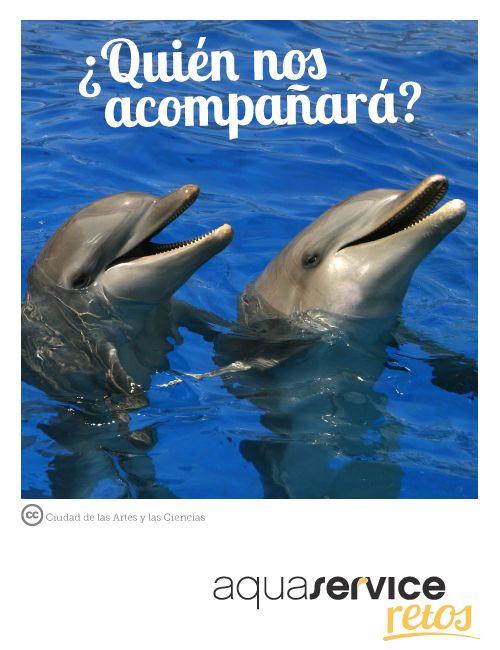 ¡Ya sabemos quién entrenará a los animales acuáticos del Oceanogràfic de Valencia! Descubre si eres tú en: http://www.aquaservice.com/informacion/ya-sabemos-quien-entrenara-a-los-animales-acuaticos-del-oceanografic-de-valencia/ #retosaquaservice