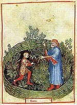 The Tacuinum Sanitatis, a medieval handbook on wellness, the herb here is Rue