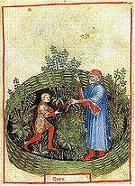 The Tacuinum Sanitatis, a medieval handbook on wellness, the herb here is Rue