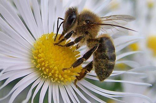 Veinte cosas que no sabias de las abejas