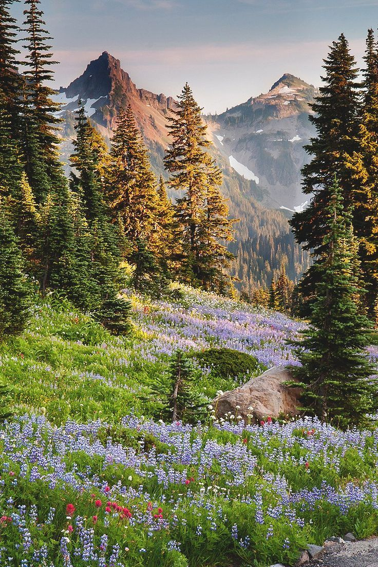 Rainier National Park, Washington                                                                                                                                                                                 Mais