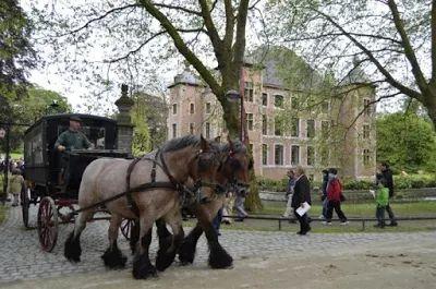 The Belgian draft horse