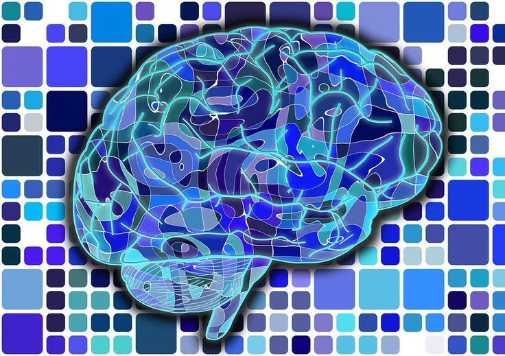 De esta manera funciona el cerebro de un adolescente #Ciencia