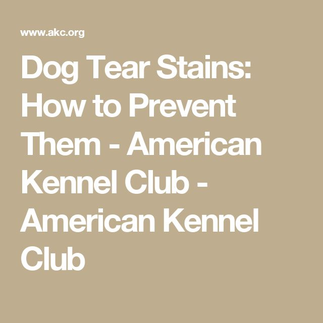 Dog Tear Stains: How to Prevent Them - American Kennel Club - American Kennel Club