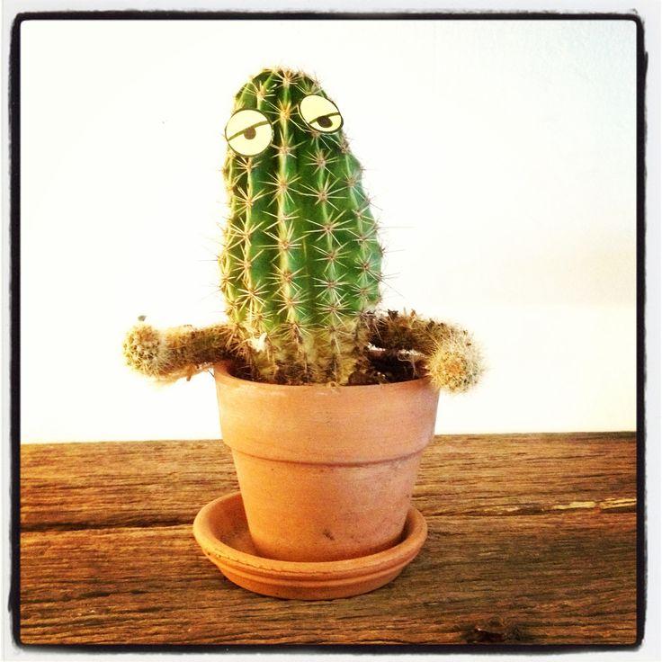 Friendly cacti