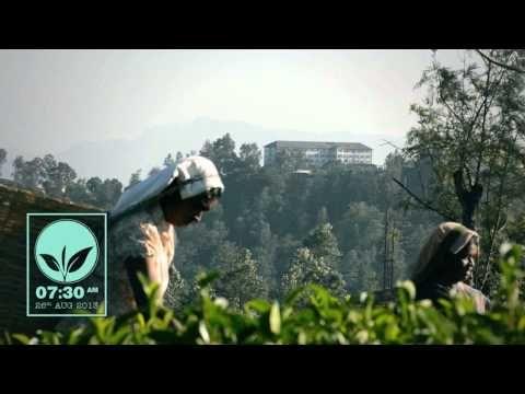 Uva Seasonal Flush 2013, Dickwella Estate Pekoe 1 from Dilmah Tea