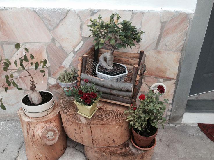 Io mio piccolo giardino....