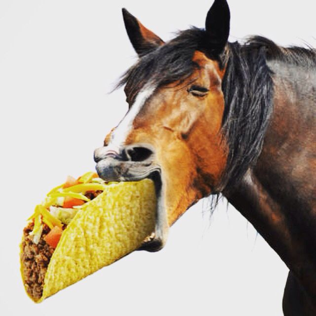 Lol Horse Eating Race Taco Horses Horse Pictures