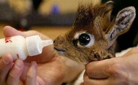 Oh my jeez, a baby giraffe! The awe-ness factor is through the roof!!!