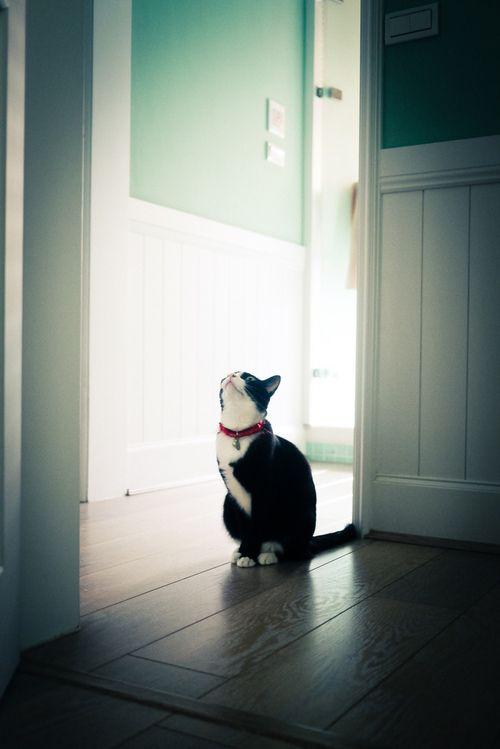 food of smile. - yotta1000:(by *嘟嘟嘟*)Kitty Cat, Dinner Time, Iris, Dear Friends, Cat Cat, Crazy Eye, Animal, Tuxedos, Kittycat