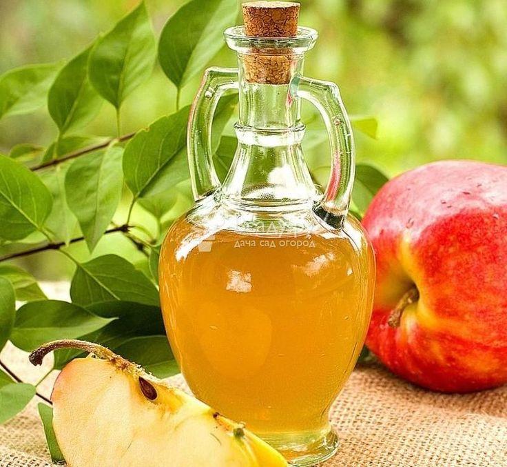 Домашний яблочный сидр: как приготовить, пошаговая инструкция с фото и видео, легкий рецепт из яблок. Польза и вред яблочного сидра, история появления напитка