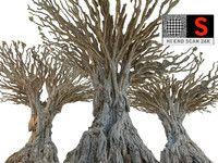 dragon tree 3d model
