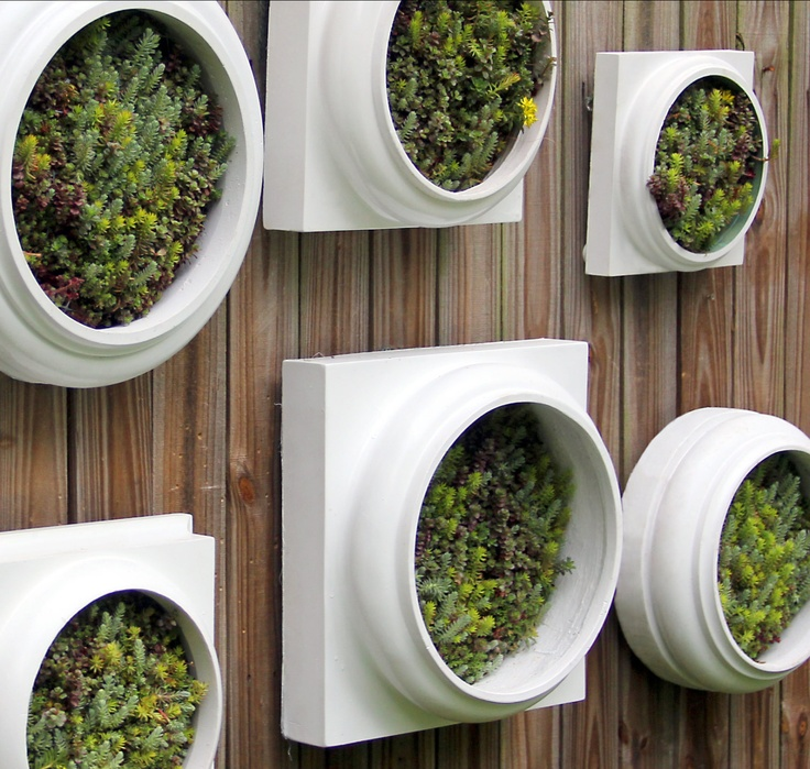 31 best images about INDOOR WALL PLANTS on Pinterest