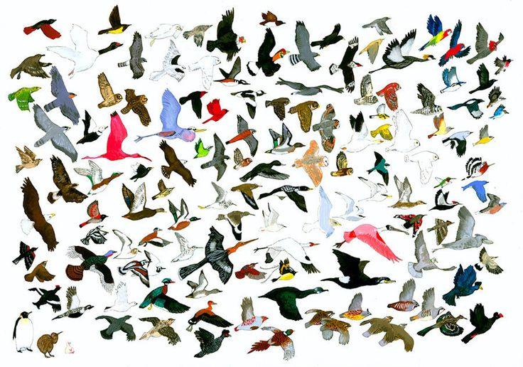 Is one bird not enough? Then check out 132 Birds Leaving AMNH (Response to Jason Polan) by Jane Mount!