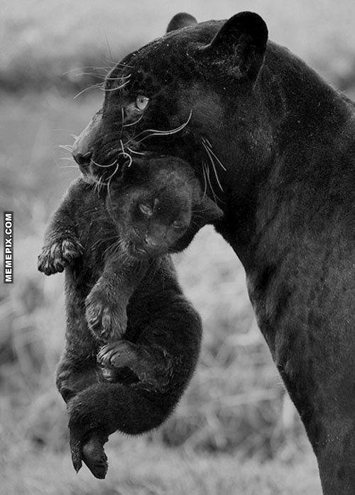 Black Panther Mom - MemePix