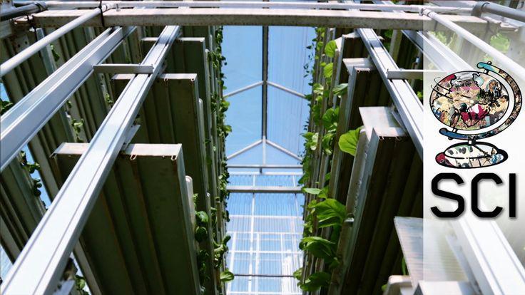 In Newark (New York) wordt de grootste verticale tuin ter wereld aangelegd. Een oude staalfabriek dient als decor voor deze tuin, waar maar liefst één miljoen kilo groente per jaar moet worden verbouwd!  Het is mogelijk dé oplossing voor toekomstig duurzaam verbouwen en het voedselprobleem in veel (stedelijke) gebieden!