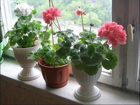 Какие цветы не нужно держать дома. Цветы в доме. Выпуск 2 - YouTube