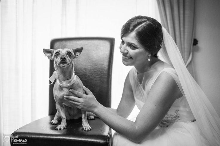 Birde and dog  Valencia