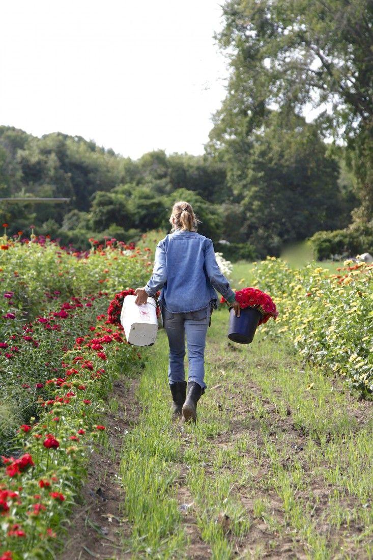Robin Hollow Farm flower fields Christine Chitnis ; Gardenista www.robinhollowfarm.com