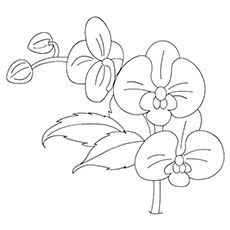 Orchid Coloring Pages - Lady Slipper Orchid