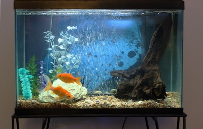 For the beginners, the best size aquarium would have at least 60 to 100L capacity.