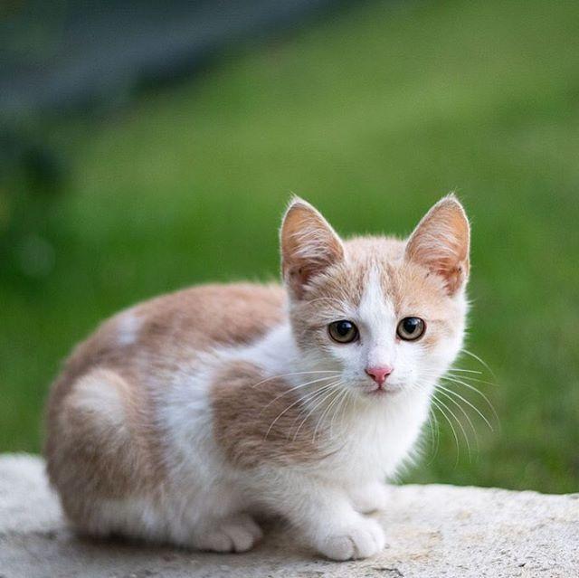 Un Gato Transforma El Regreso A Una Casa Vacía En La Vuelta Al Hogar Sentís Lo Mismo Gatos Gato Cat Cats Gats Katuak Cats Animals Cute Funny Animals
