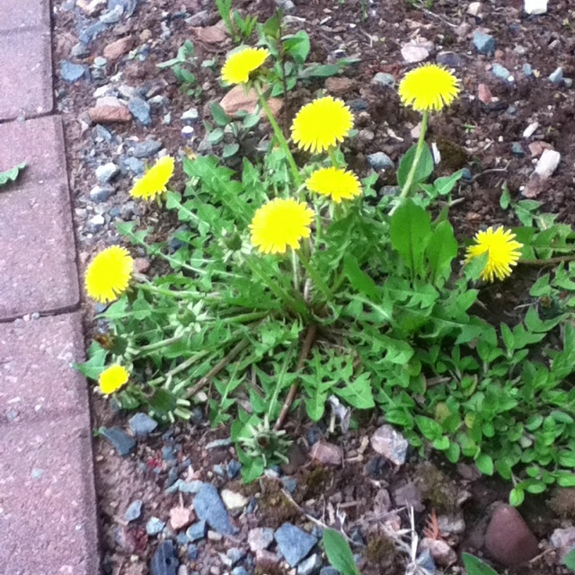 25 best garden weed control images on pinterest for Canadian gardening tips