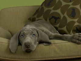 9 Tips For A Chic Pet Friendly Home
