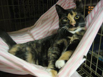 =^.^= diy cat hammock
