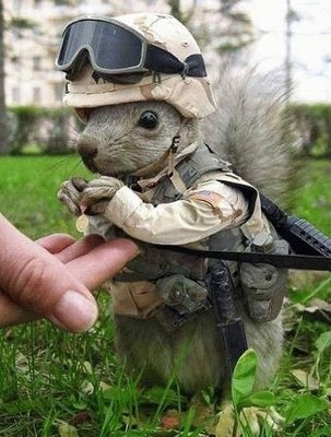 What a cutie. =]: Secret Squirrels, Soldiers, Funny Animal Pictures, Animal Costumes, Marines Animal, Funny Pictures, Funnypictures, Funny Squirrels, Photo