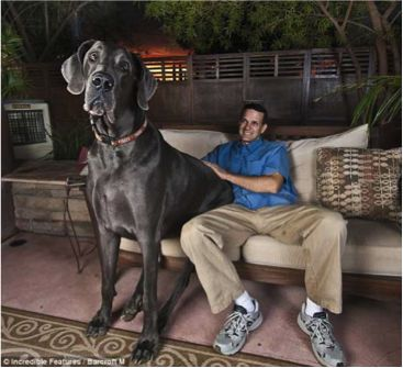 A Tribute to George the worlds Tallest Dog Paddington Pups
