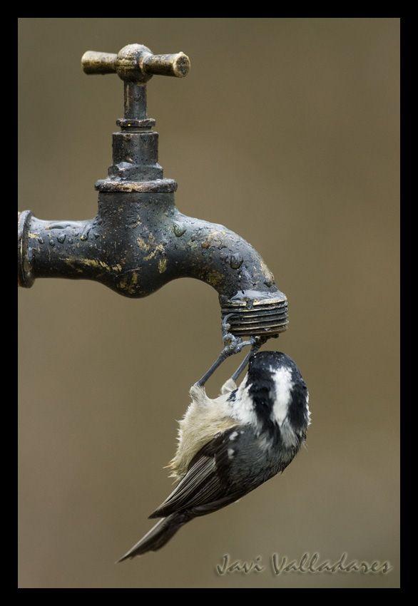 Bebe agua del grifo/Drink tap water