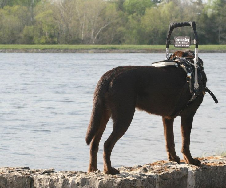The types of Service Dogs and their jobs, functions and training vary widely. Learn more about Service Dogs and what they do at Anything Pawsable!