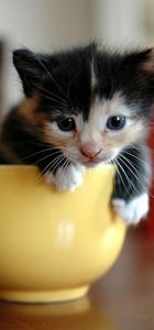 VetLocator.com Daily Paws - The Power of Cuteness - Cute & Adorable Baby Animals in Cups - Ask A Pet Pro + More!
