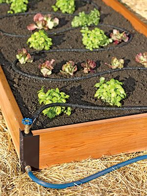 New Aquacorner System - you can create a self-watering raised bed.Gardens Ideas, Raised Gardens, Soaker System, Raised Beds, Beds Water, Rai Gardens Beds, Rai Beds, Raised Garden Beds,  Flowerpot