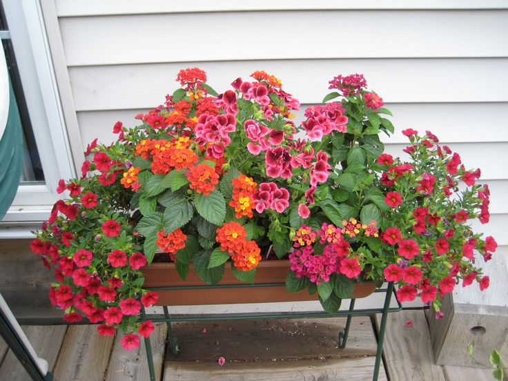 Container Planting Create A Hummingbird Combination