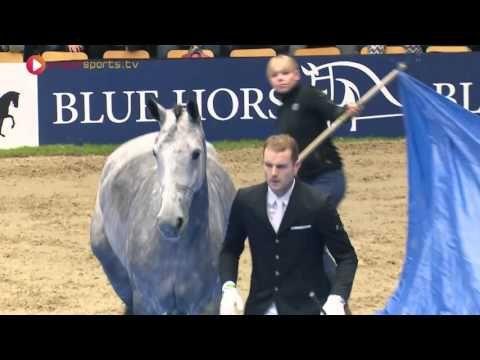 """""""WOW!"""" - Die Reaktion des Pferdes, als die Abdeckplanen angehoben werden, ist unfassbar! - fantastierisch.de"""