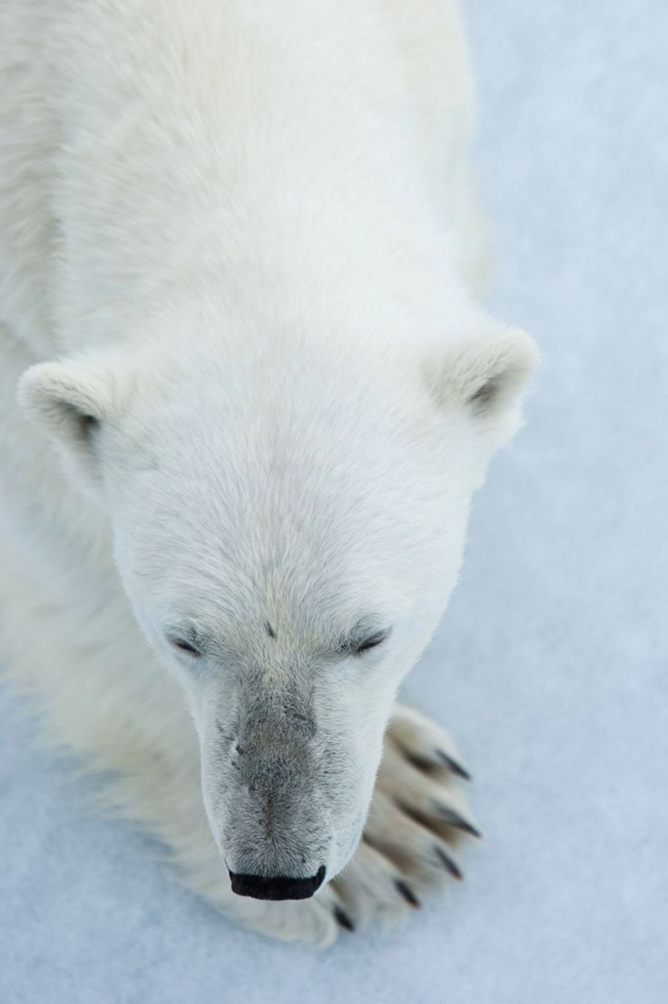 International+Polar+Bear+Day+-+in+pictures