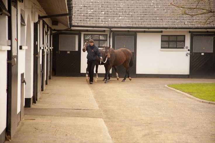 Normal day at the Irish national stud