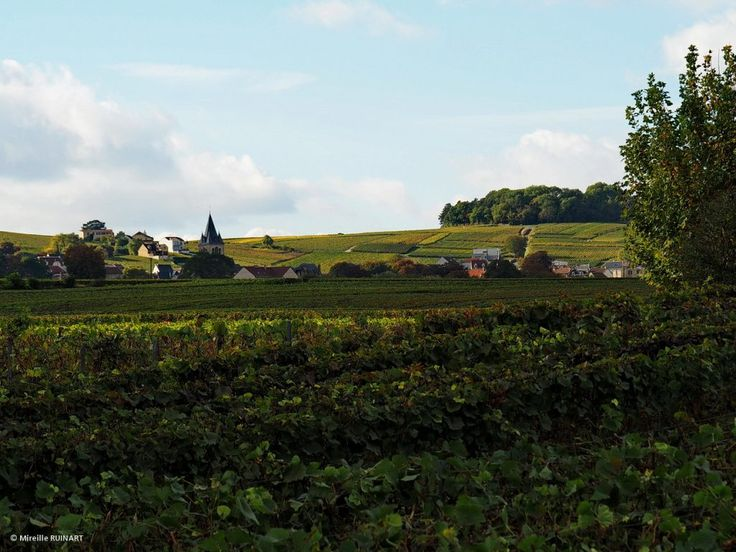 Retour imagé du #global #ChampagneDay du 21/10/2016 | Champagne 1er cru Damien Buffet et chambre d'hôtes à Sacy près de Reims