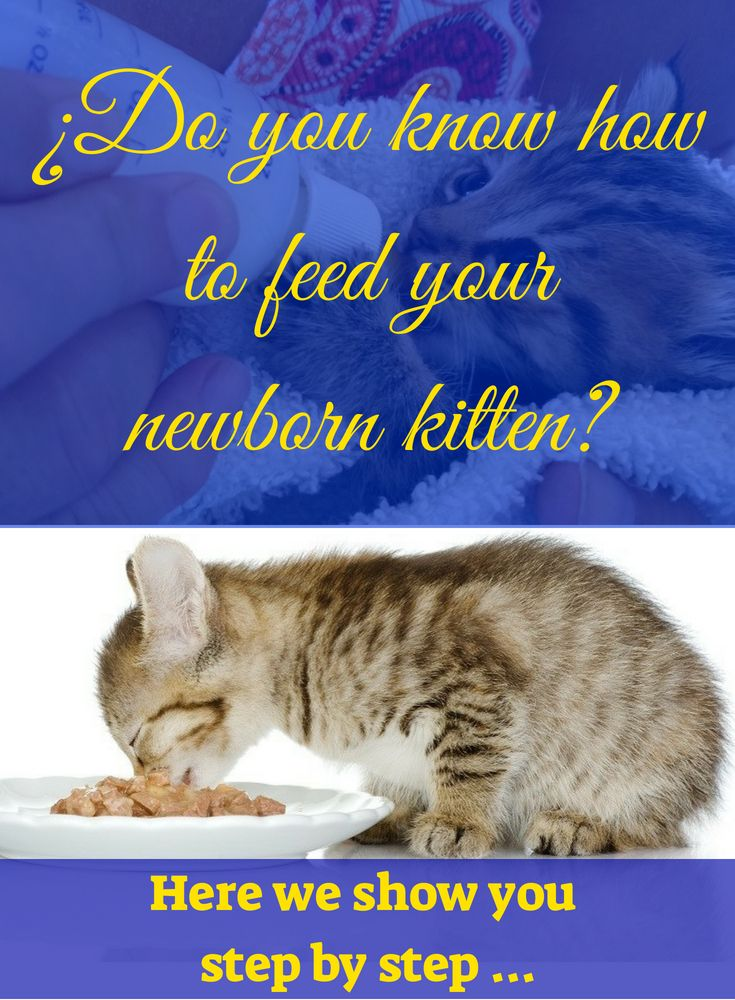 Do You Know How To Feed Your Newborn Kitten Newborn Kittens Baby Cats Kittens