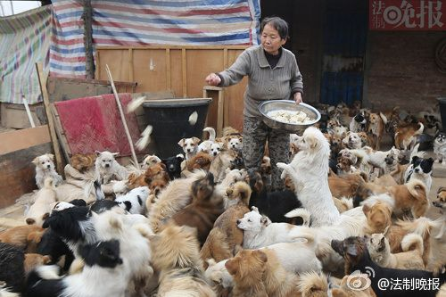Old men and 1300 stray dogs in Chinese New Year's Eve in Weinan Shaanxi 4