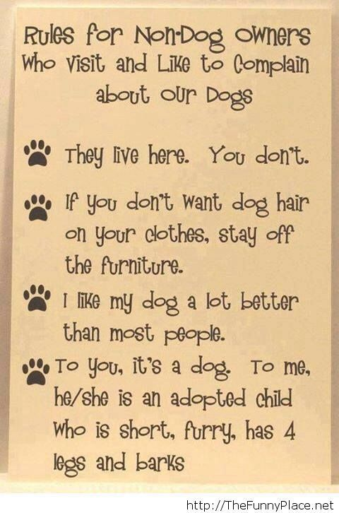 Yes, dogs house, dogs rules