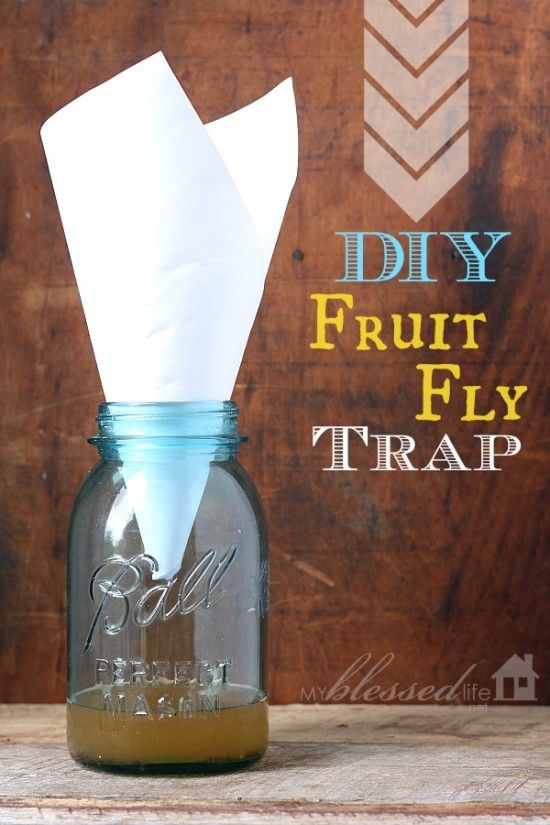 15 Clever Ways to Keep Pesky Bugs Away - One Crazy House