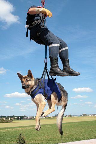Pompier et chien -