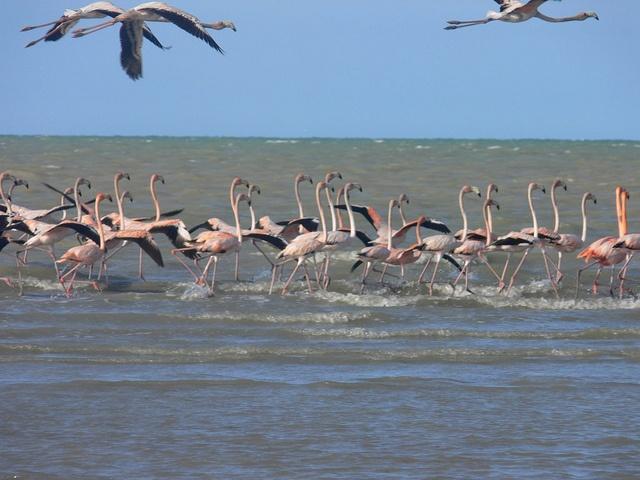 Parque Los flamingos, Guajira, Colombia