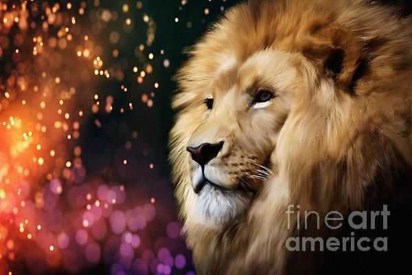 Male lion on an enchanted sparkling night by Tracey Everington. Prints and merchandise available.